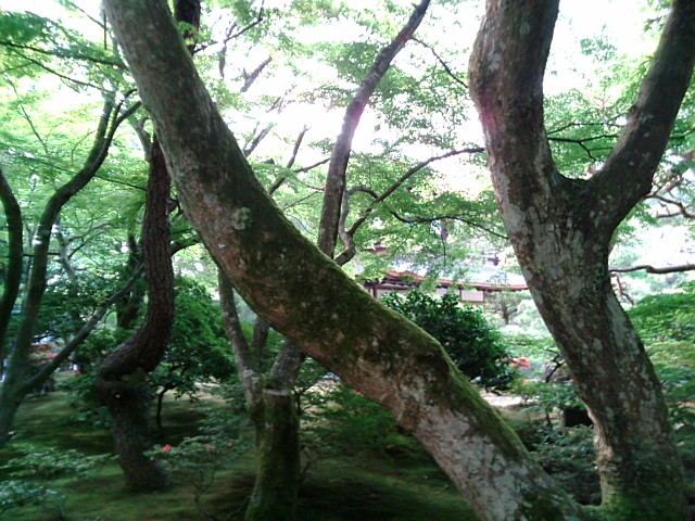 コケの生した木