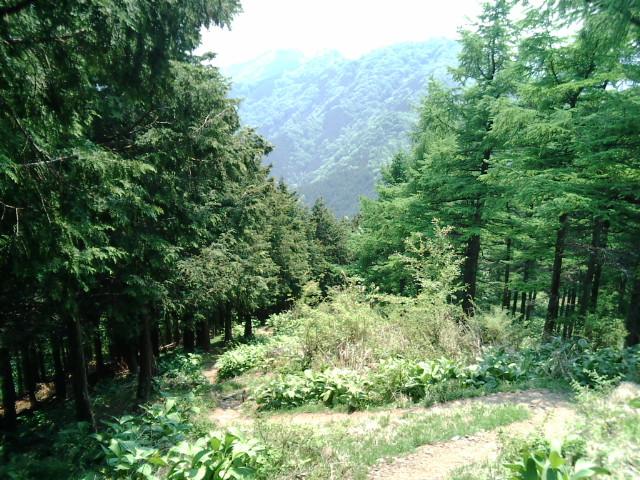武甲山11