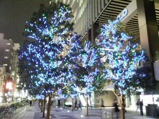 電飾されたツリー