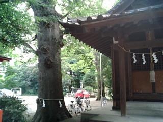 神社と大木