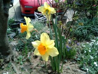 黄色い花たち