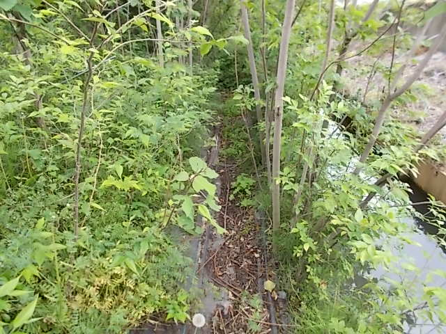家の裏の用水路のところの草木