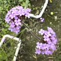背の高い花