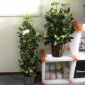 観葉植物に見立てた光触媒
