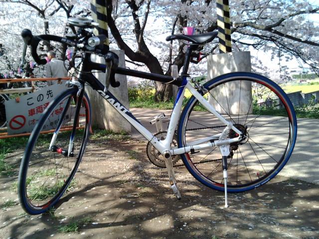 TCRと桜