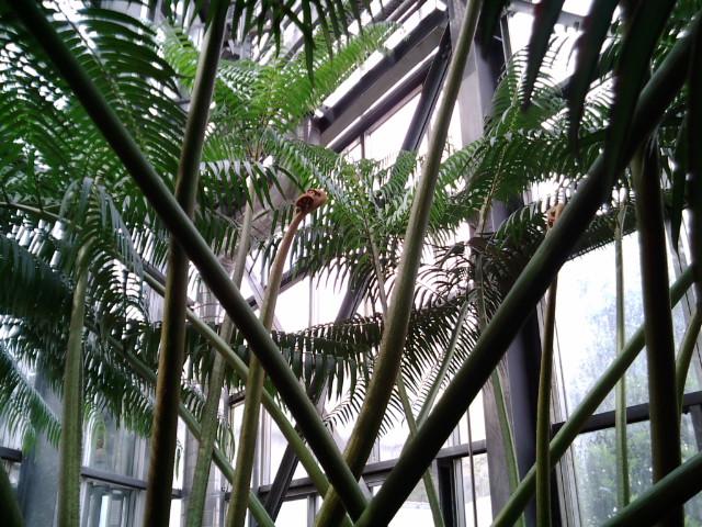 巨大なぜんまい植物