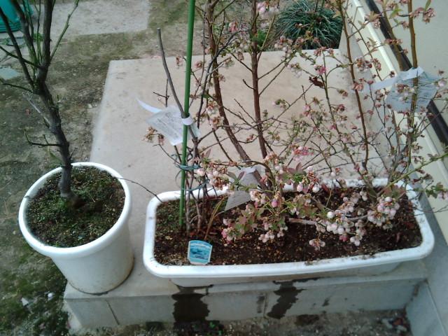 雑草を取り除いた鉢