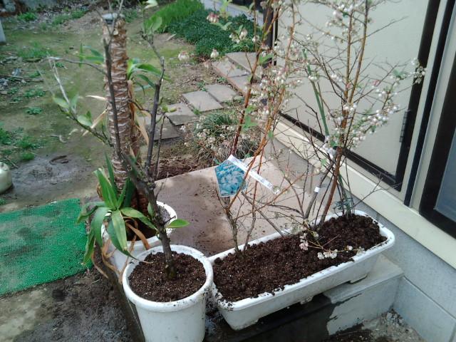 土替えした植物