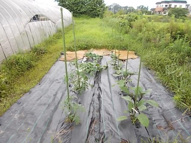 200705野菜畑
