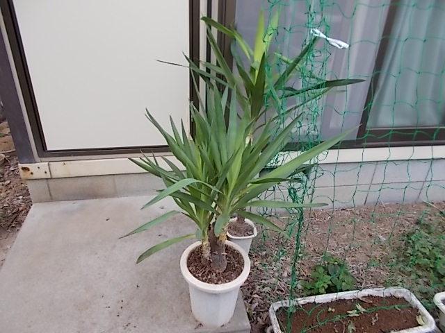 210509観葉植物