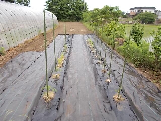 野菜畑210527