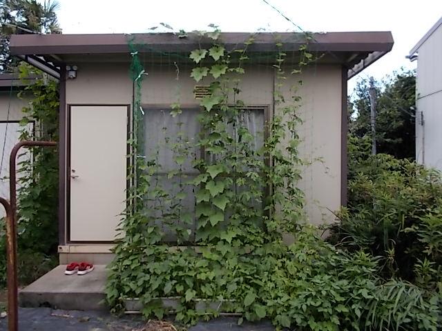 210703緑のカーテン南側