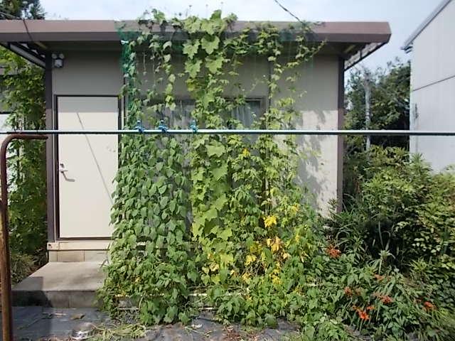 210715緑のカーテン南側