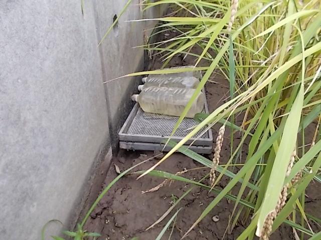 白石の排水口の網